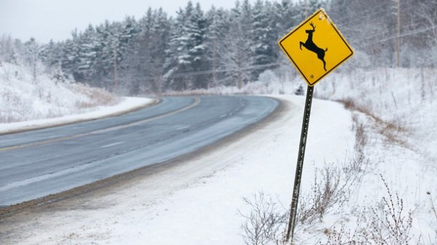 Gty_deer_crossing_road_kill_lpl_130