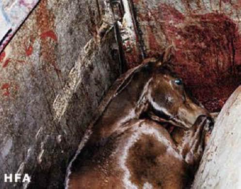Horsemeat01