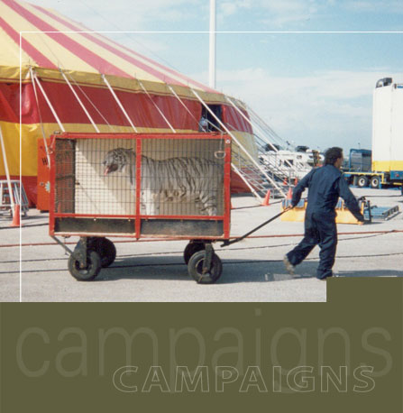 Campaigns_circuses